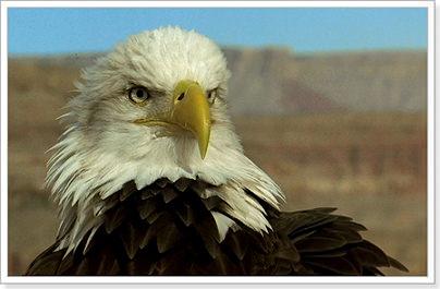 Смотрит н птиц по английскому языку