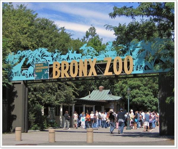 Диалог на английском в зоопарке