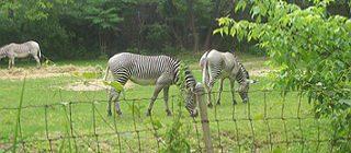 Зоопарк по-английски